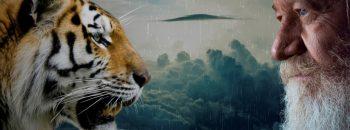 Taxonomie der Tiere