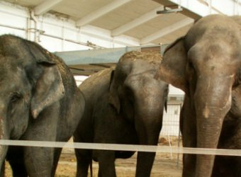 elefantenzirkus