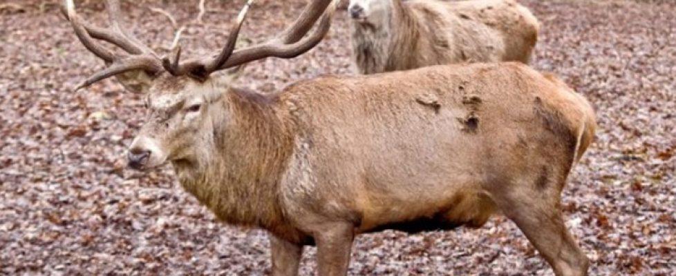 Jagd auf Wildtiere