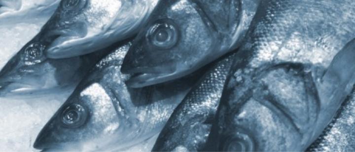 toterfisch