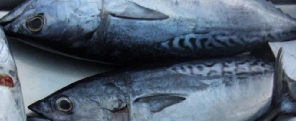 Ware Meeresfrüchte