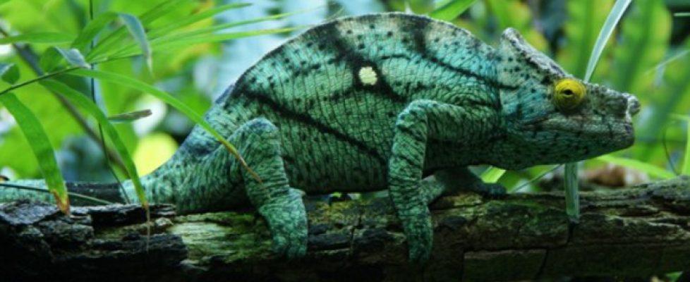 Biodiversität - die Dienstleistung des Ökosystems Erde