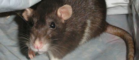Tierplagen, Ungeziefer und Schädlinge