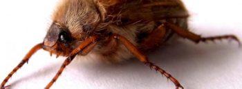 erste Insekten