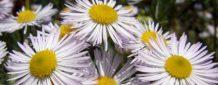 erste Blütenpflanzen