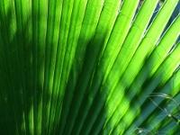 grüne Lianen