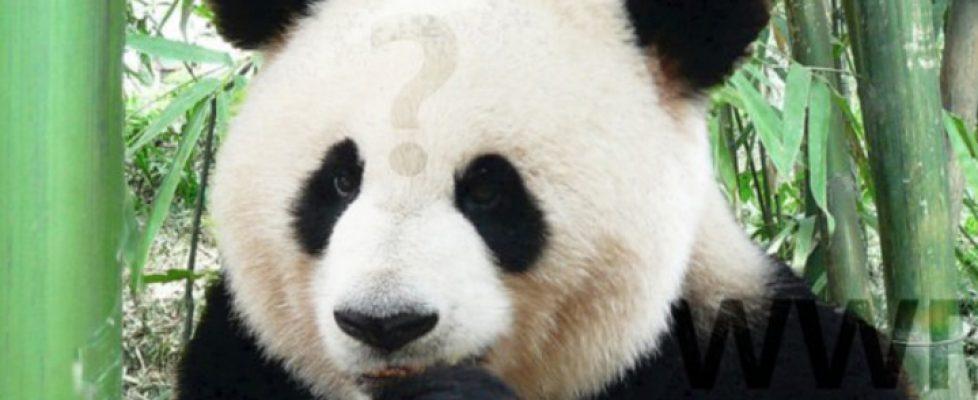 verbaler Angriff auf den WWF