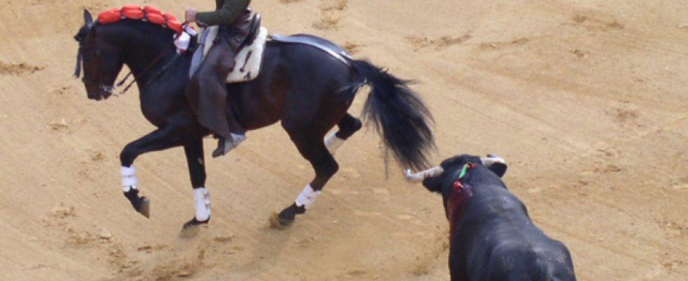 pferdequal