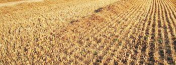 die Entstehung der Landwirtschaft